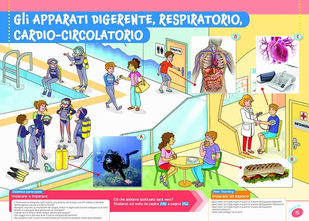flip poster di scienze